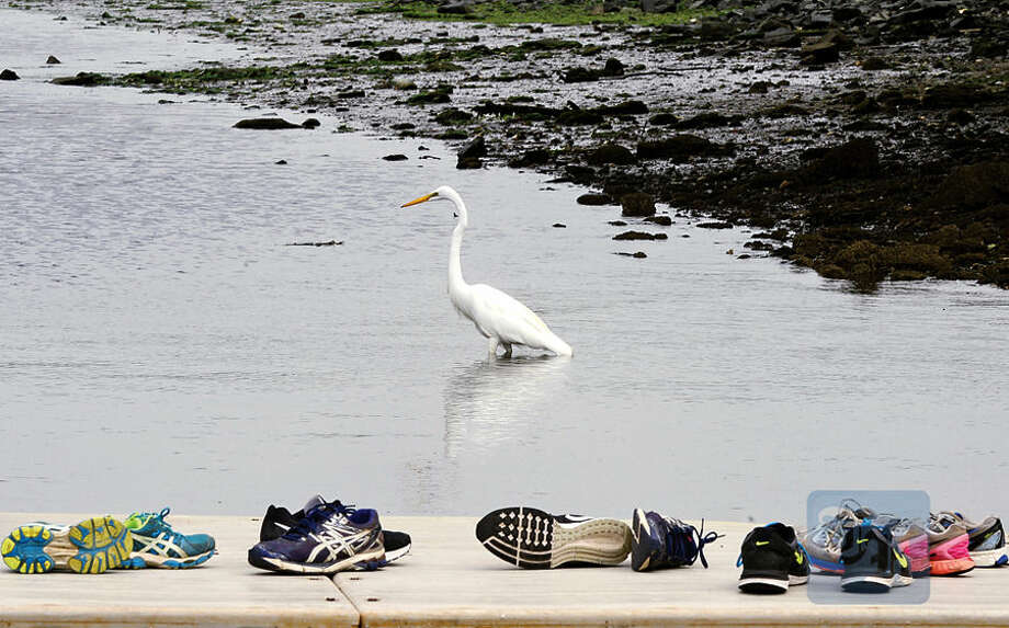 Hour photo / Erik Trautmann A snowy egret feeds along the Norwalk River near the Maritime Rowing facility on a recent morning.