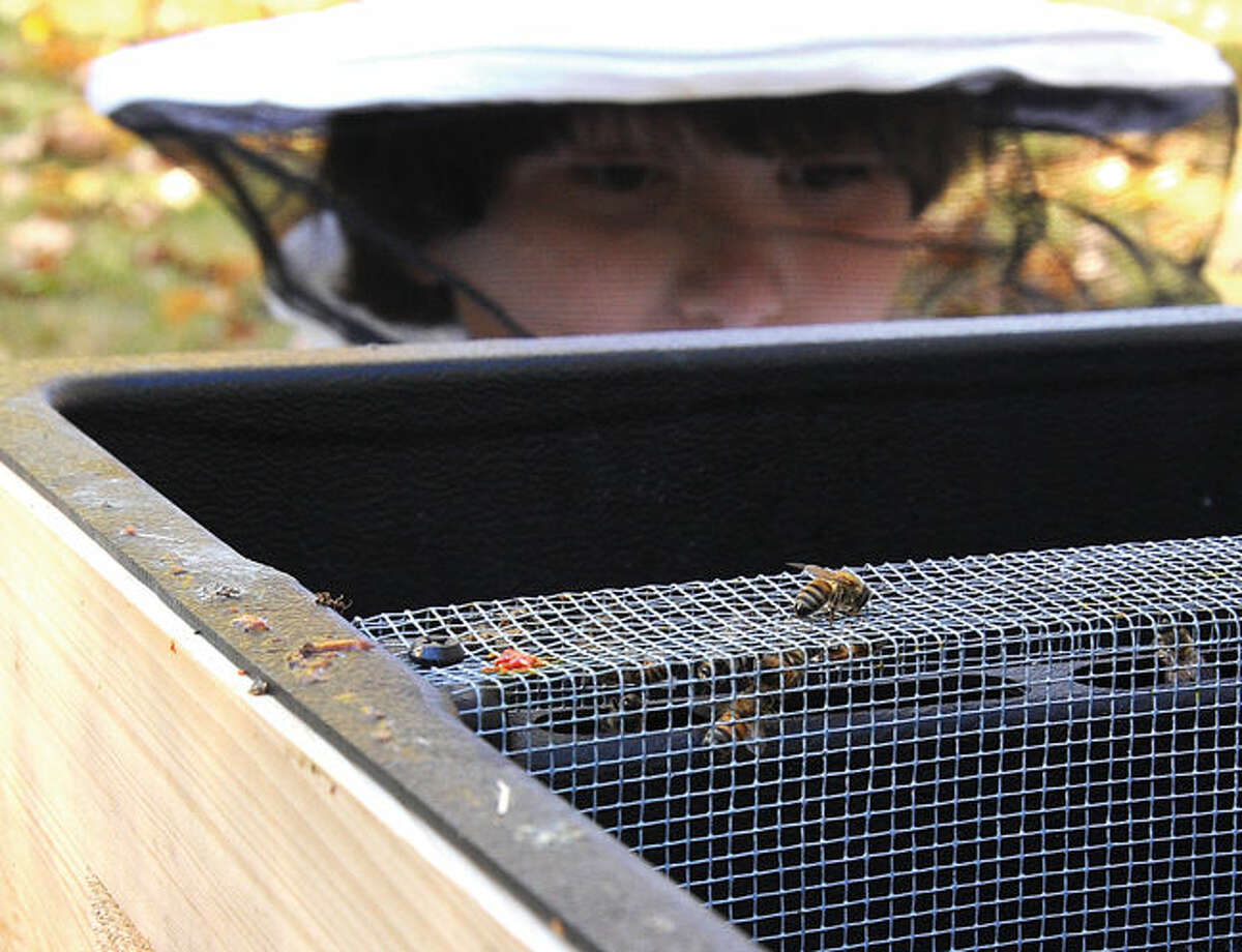 Montessori School elementary students have built a beehive at the school property and welcomed a colony of honeybees. In exploring the hive, the children will gain new understandings of ecology, math and biology.