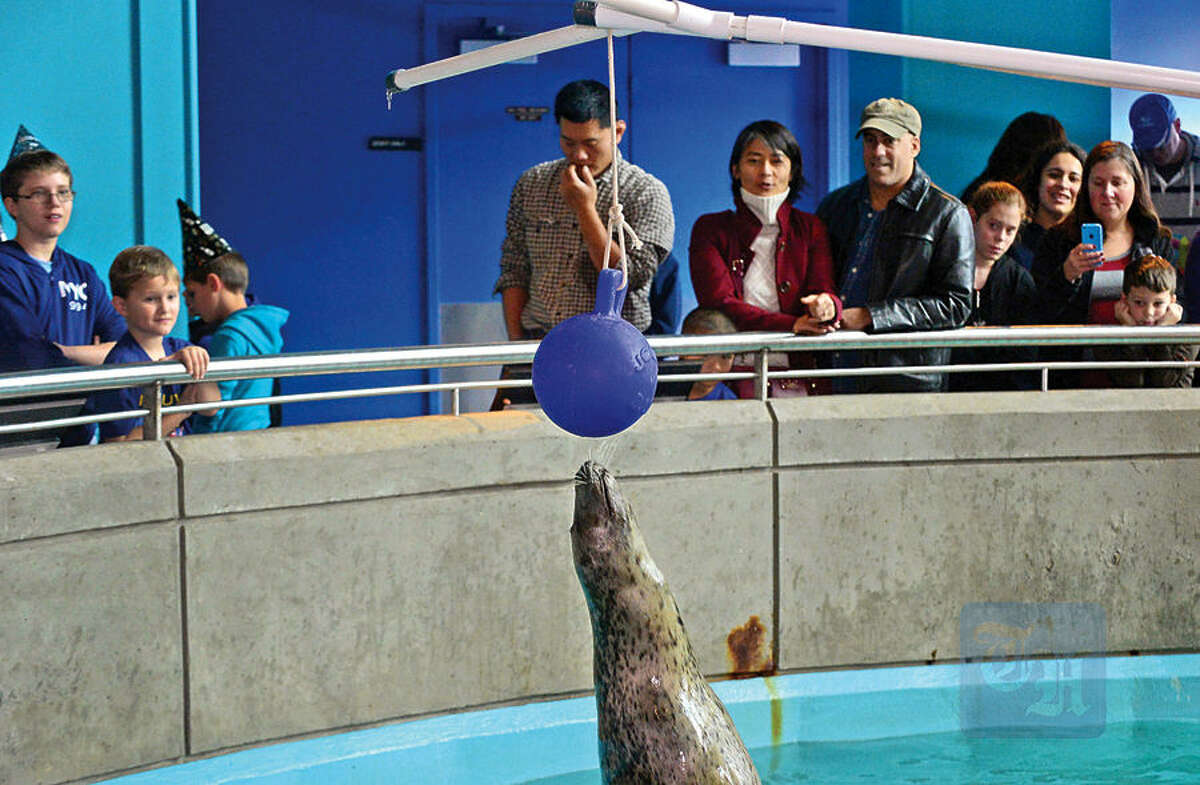 Hour photo / Erik Trautmann Visitors to the Maritime Aquarium watch as Tillie the Harbor Seal touches a ball as part of the Aquarium's special countdown and ball drop celebration, Noon Year's Eve, during the regularly scheduled noon feeding Thursday.