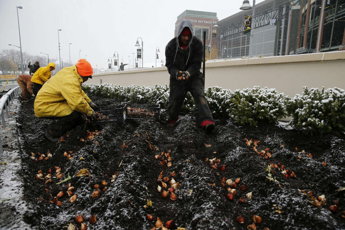 Workers of Heath Firms, from Coloma, Wis., plant tulips and work on holiday decorations at Lambeau Field, Monday, Nov. 10, 2014, in Green Bay, Wis. A frigid blast of air is moving into the mainland U.S. thanks to a powerful storm that hit Alaska with hurricane-force winds over the weekend. Residents in the Upper Midwest are bracing for heavy snow and temperatures plunging across numerous states. (AP Photo/Kiichiro Sato)