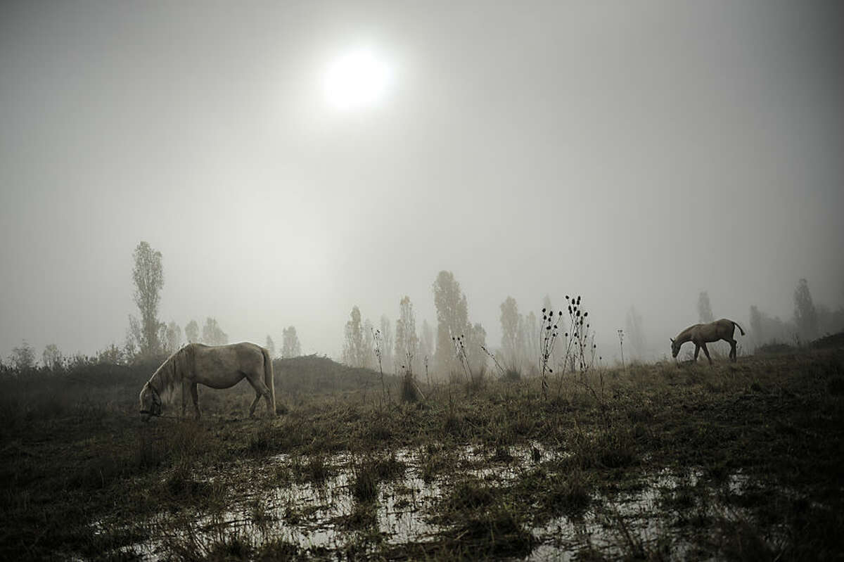 A foal, right, walks on the land next to a mare as fog covers the landscape on an autumn sunrise in Ezquiroz, near to Pamplona northern Spain, Tuesday, Nov. 18, 2014. The autumn season paints the landscape with his brilliant colors and make a special atmosphere with the fog. (AP Photo/Alvaro Barrientos)