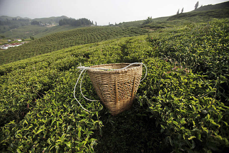 In this Sunday, Nov. 16, 2014 photo, a basket filled with tea leaves lies on a tea field at Kanyam in Illam district, around 500 kilometers (310 miles) from Katmandu, Nepal. Illam is a hilly district of tea gardens and estates in eastern Nepal's Himalayan region with one of its largest and most productive tea estate being Kanyam estates. The district produces orthodox tea, hand-processed or machine rolled, which is generally exported to international markets, specially Europe and the United States. Most of the tea pickers here are paid 186 Nepalese Rupees (US $ 2) for 8 hours of work everyday. (AP Photo/Niranjan Shrestha)