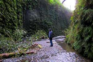 At dusk, Chronicle outdoors writer Tom Stienstra at center of Fern Canyon at Prairie Creek Redwoods State Park in California's Redwood Empire