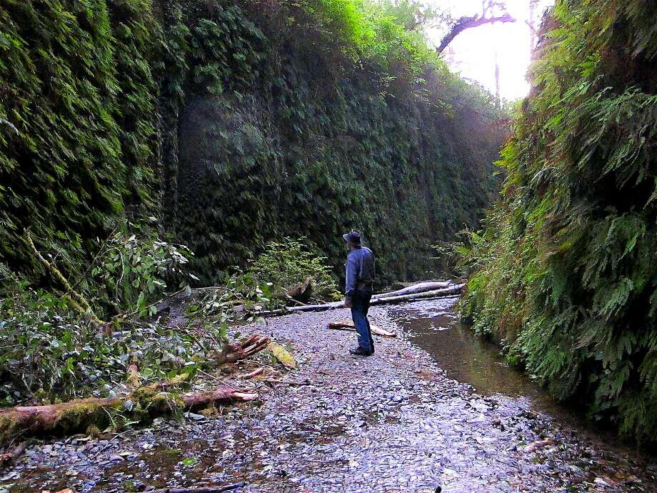 At dusk, Chronicle outdoors writer Tom Stienstra at center of Fern Canyon at Prairie Creek Redwoods State Park in California's Redwood Empire Photo: Tom Stienstra, Michael Furniss / Special To The Chronicle