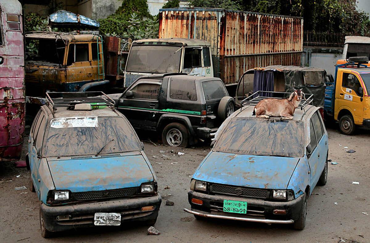 A goat sits on top of a car at a vehicle dumping yard in Dhaka, Bangladesh, Tuesday, Dec. 2, 2014. (AP Photo/A.M. Ahad)