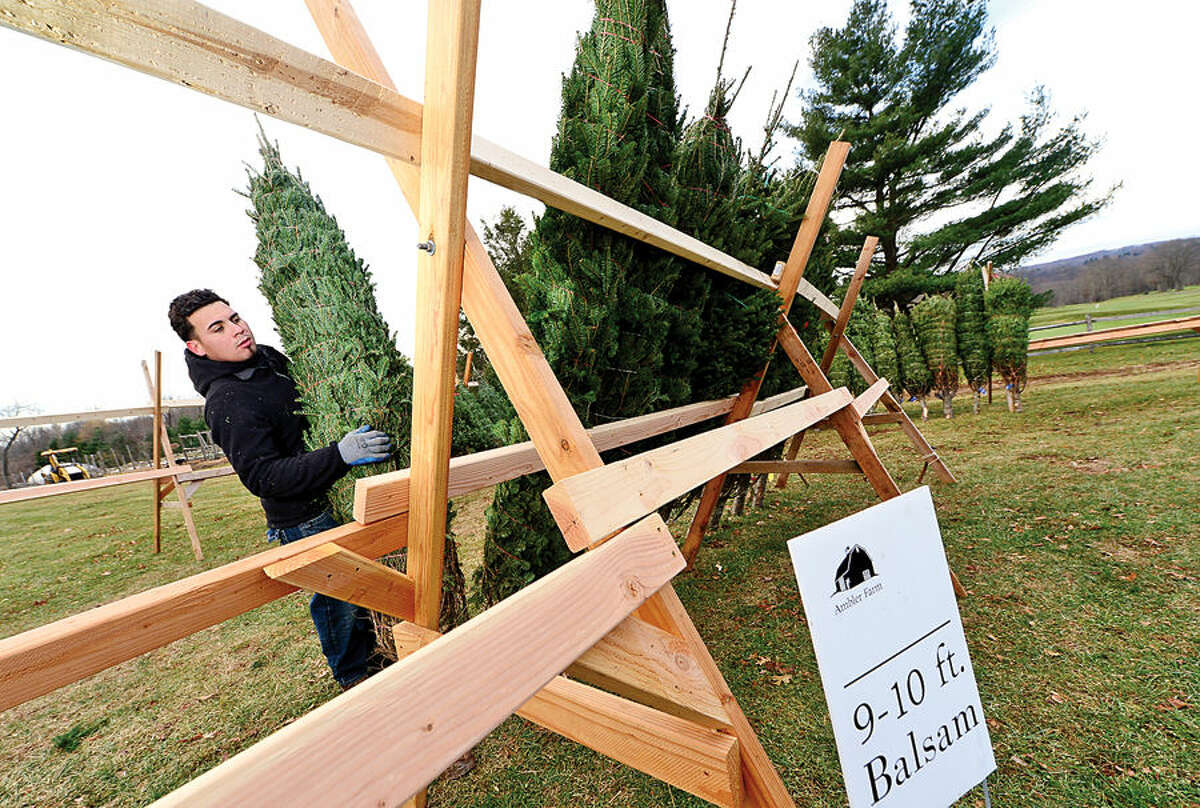 Workers with Ambler Farm, Lee Horticultural Services, Tall Trees Landscaping, Earthscapes and Wilton Lawn Services, including Tall Trees employee Danny Barrera, unload nearly 400 Christmas trees and over 250 wreaths for the farm's annual Christmas tree sale.