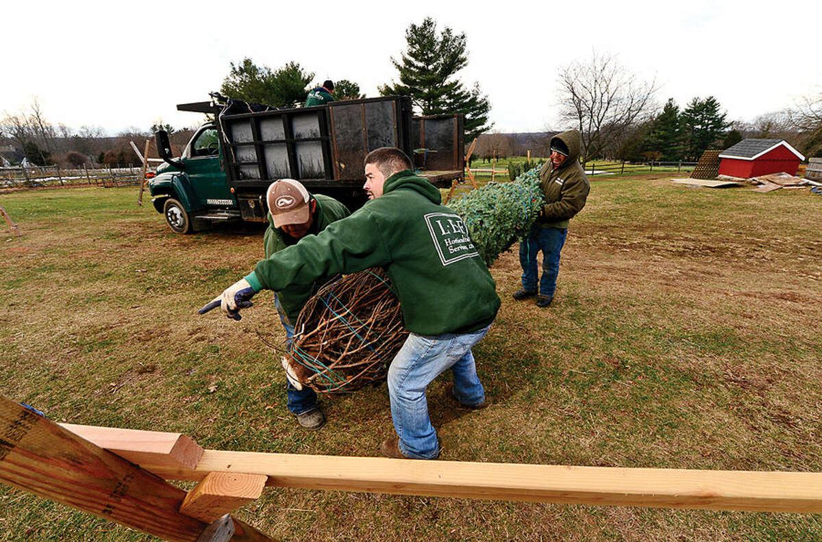 Workers with Ambler Farm, Lee Horticultural Services, Tall Trees Landscaping, Earthscapes and Wilton Lawn Services unload nearly 400 Christmas trees and over 250 wreaths for the farm's annual Christmas tree sale.