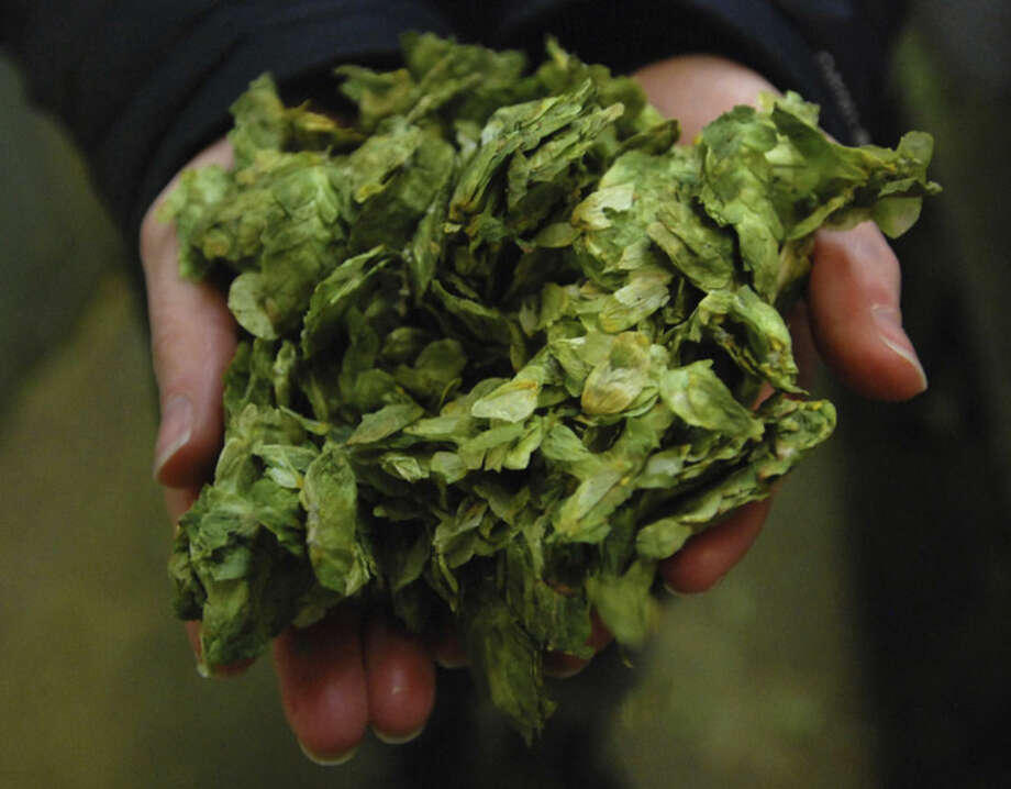 In this Nov. 18, 2014 photo, Gina Schauland shows off some hops at Deschutes Brewery in Bend, Ore. Many of the brewers at Deschutes have left to start their own breweries, which now number nearly 30 for the city of 80,000 and surrounding area. (AP Photo/Jeff Barnard)