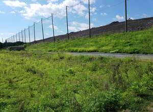 Native plants are growing in a newly restored area right next to the Rapp Road landfill. (Cathleen F. Crowley/Times Union)