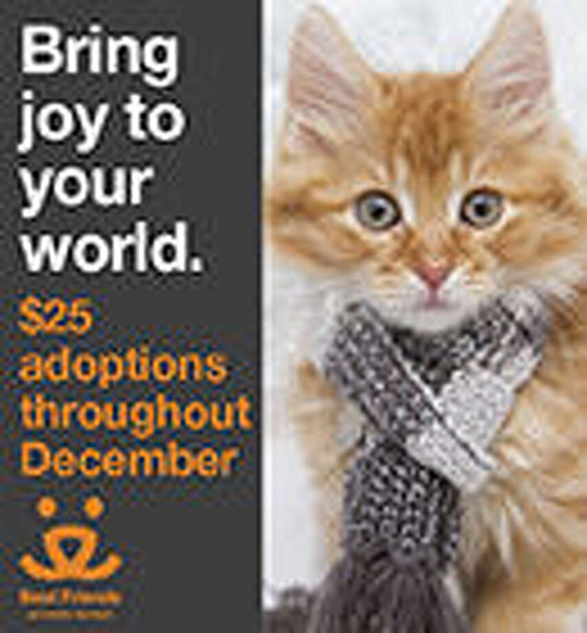 Adopt a cat or dog from PAWS for just $25!