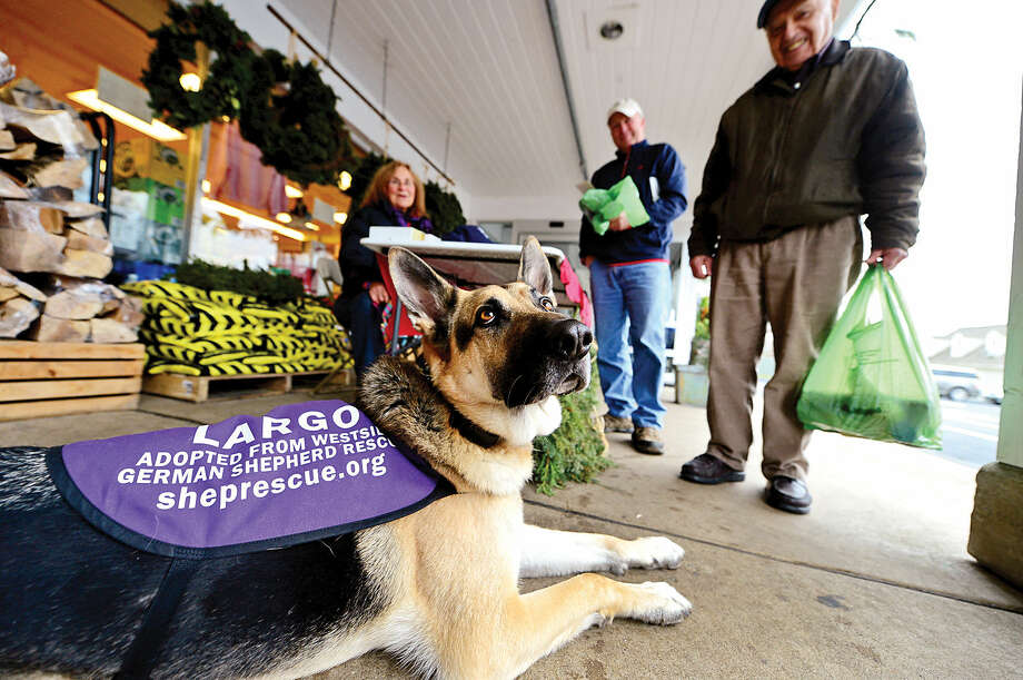 Eleanor Sasso and her rescued dog, Largo, look for donations and homes for German shepherds as they campaign for Westside German Shepherd Rescue of Los Angeles while outside Village Market Tuesday.