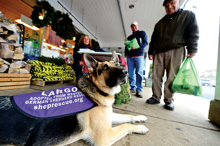 Hour photo / Erik Trautmann Eleanor Sasso and her rescued dog Largo, look for donations and homes for german shepards as they campaign for Westside German Shepard Rescue of Los Angeles while outside Village Market Tuesday.