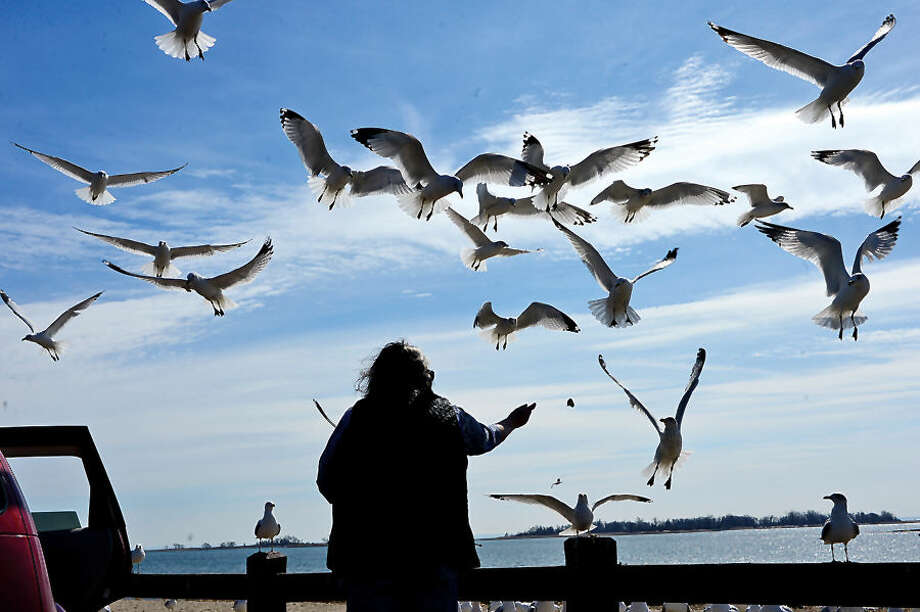 Hour photo / Erik Trautmann Norwalk resident Carmen Proulx feeds Seagulls at Calf Pasture Beach Tuesday.