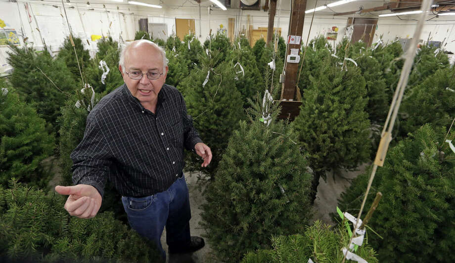 In this photo taken Tuesday, Dec. 23, 2014, Gary Chastagner, a Washington State University plant pathology professor, stands among trimmed Douglas fir trees suspended in a temperature and humidity-controlled room at a school research facility in Puyallup, Wash. Consumers consistently cite messiness as one of the most common reasons they don't have a real tree, says the National Christmas Tree Association. (AP Photo/Elaine Thompson)