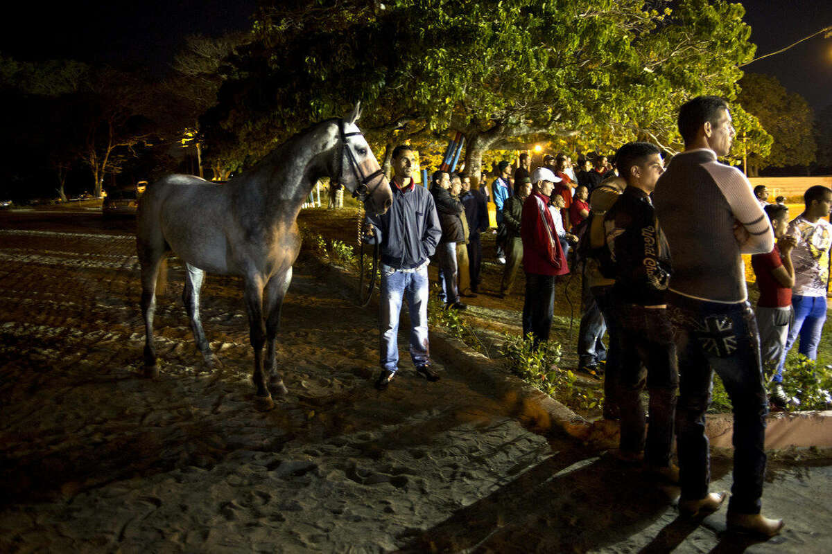 In this Jan. 31, 2015 photo, a horse trainer stands with a horse before showing it at an auction inside the National Equestrian Club in Lenin Park on the outskirts of Havana, Cuba. After Fidel Castro's government banned horse racing along with gambling and professional sports in 1959, Cuba continued to participate in amateur equestrianism, producing top-notch horse riders and trainers. But the costly sport slipped into decline in the 1990s, when the fall of the Soviet Union provoked an economic crisis that made it hard to care for the animals. (AP Photo/Ramon Espinosa)