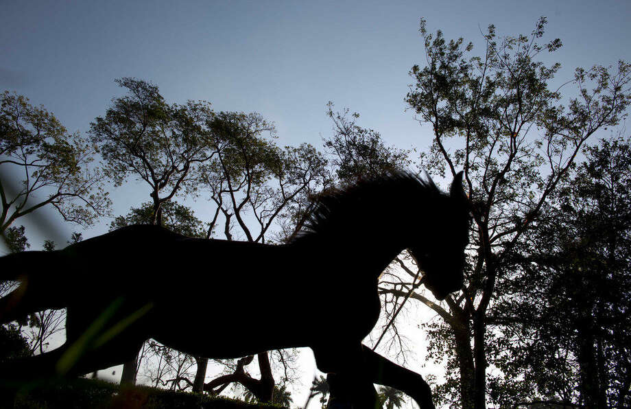 In this Feb. 4 , 2015 photo, a horse trots on the state-run Azucarero horse ranch in Artemisa, Cuba. Starting in 2005, Cuba began to import young Dutch Warmbloods then train them for competitive jumping before selling them at age 3. (AP Photo/Ramon Espinosa)