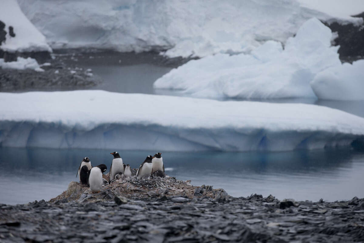 In this Jan. 22, 2015 photo, Gentoo penguins stand on rocks near the Chilean station Bernardo O'Higgins, Antarctica. Here on the Antarctic peninsula, where the continent is warming the fastest because the land sticks out in the warmer ocean, 49 billion tons of ice (nearly 45 billion metric tons), is lost a year according to NASA. (AP Photo/Natacha Pisarenko)