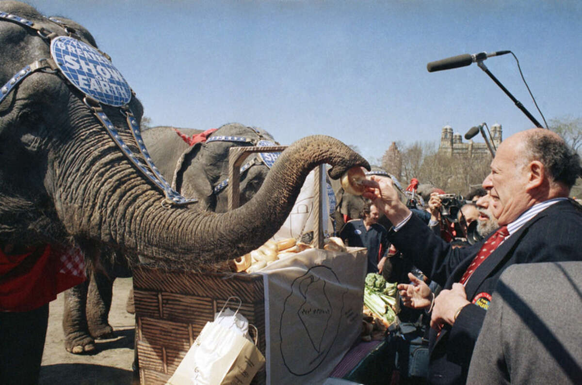 FILE - In this April 12, 1988 file photo, New York City Mayor Edward Koch feeds a bagel to an elephant from the Ringling Brothers and Barnum and Bailey Circus during a lunchtime picnic in New York. The circus will phase out the show's iconic elephants from its performances by 2018, telling The Associated Press exclusively on Thursday, March 5, 2015 that growing public concern about how the animals are treated led to the decision. (AP Photo/Mario Cabrera)
