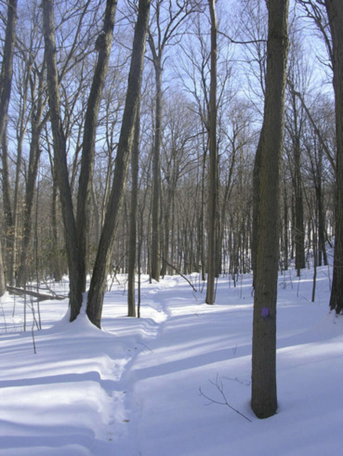 Photo by Rob McWilliams A section of the violent-blazed trail at Sleeping Giant.