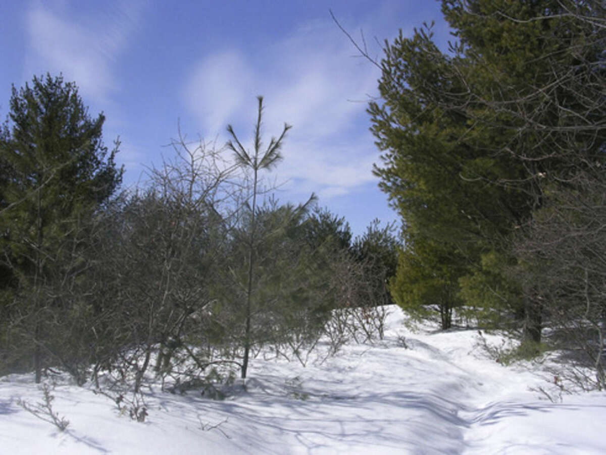 Photo by Rob McWilliams A section of the blue-blazed trail at Sleeping Giant.