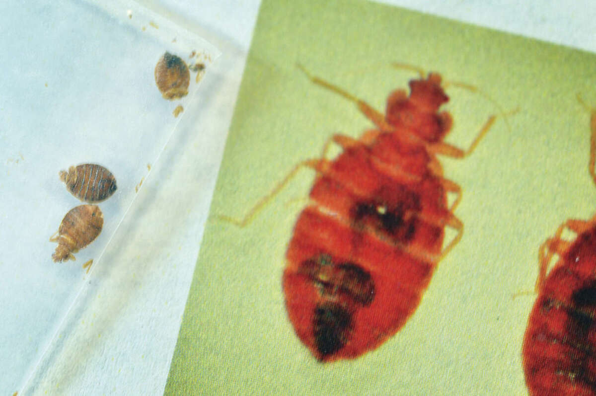 Hour Photo/Alex von Kleydorff A plasic bag holds some dead bedbugs next to a enlarged photo on a flyer at the City of Norwalk Health Department