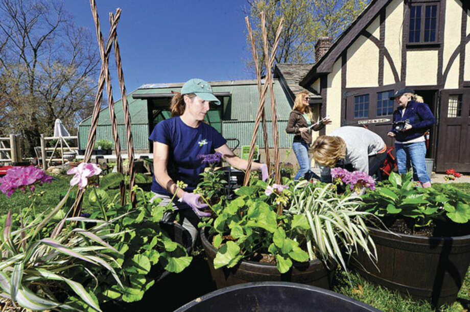 Hour photo / Erik Trautmann Rowayton Gardeners president Erin Combs makes potted plant designs for their annual Spring Plant Sale this Saturday.