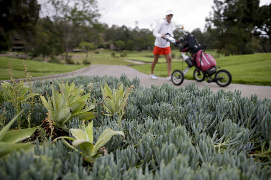 In this April 25, 2015 photo, a golfer passes succulents and other drought-resistant plants at the El Niguel Country Club in Laguna Niguel, Calif. California's epic drought is reshaping the course at El Niguel Country Club and dozens of others statewide. Pressed by the fourth year of bone-dry weather and the threat of state-mandated water cuts, some of the poshest courses in California are ceding back to nature some of their manicured green, installing high-tech moisture monitoring systems and letting the turf they don't rip up turn just a little bit brown. (AP Photo/Gregory Bull)