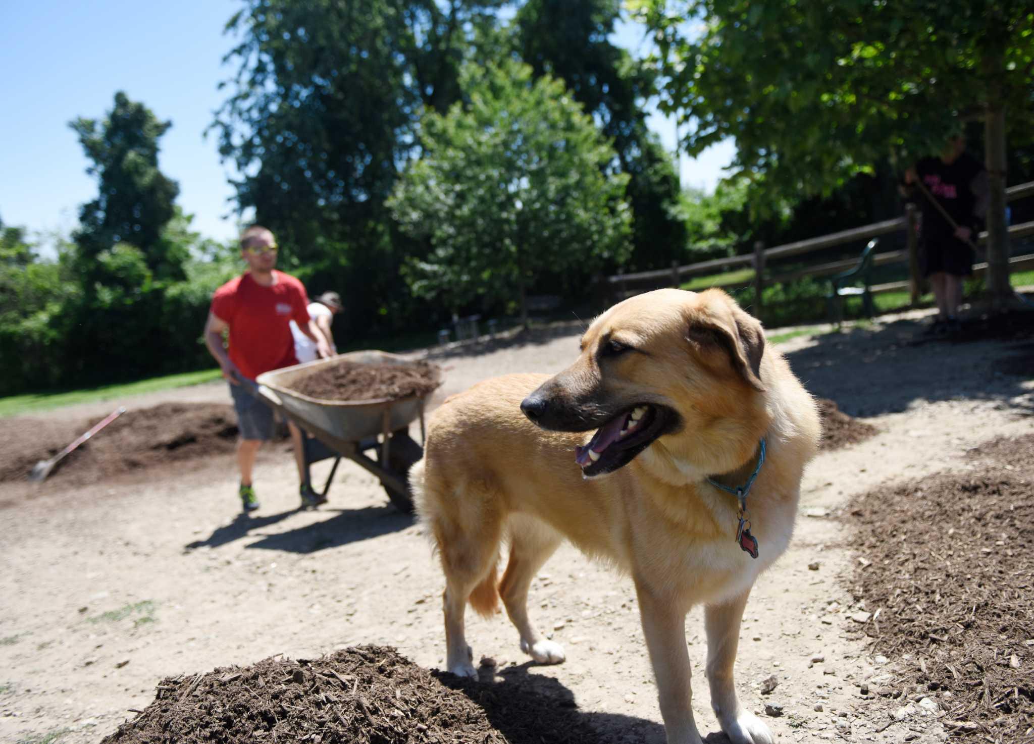 Rowayton Dog Park