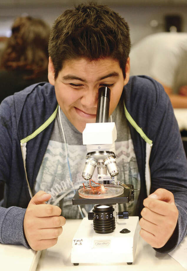 """Hour photo / Erik Trautmann Antonio Hernandez looks at a Red Beard Sponge as Norwalk 8th and 9th graders participate in """"Marine World Magnified"""" activity, using microscopes to observe small marine organisms, as part of the Mayor's Student Engineering & Science Program Thursday at the Maritime Aquarium. The Mayor's Student Engineering & Science Program is a new initiative funded by city residents' participation in the Norwalk Energy Efficiency Challenge."""