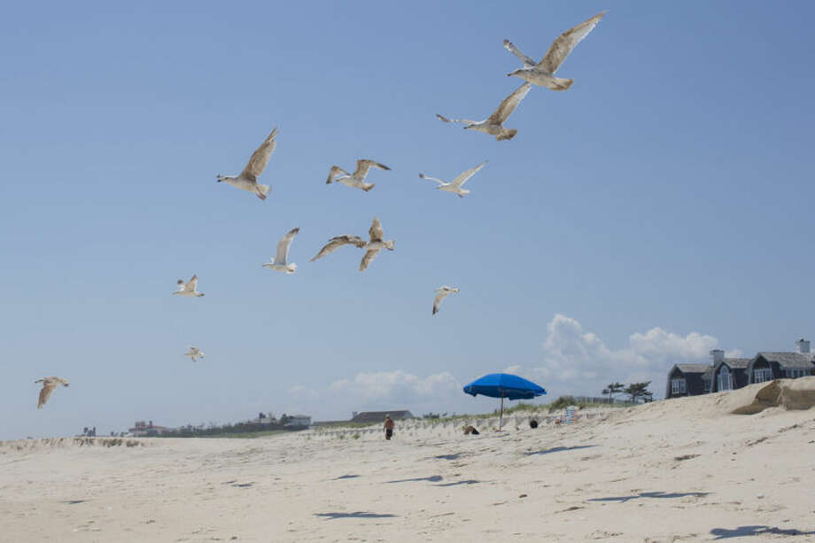 In this photo taken on Friday, July 11, 2014, gulls lift off near a beachfront home in Southampton, N.Y. Studies show the gap separating the rich from the working poor has been ever-widening in recent years and few places provide that evidence as starkly as Long Island's Hamptons. (AP Photo/John Minchillo)