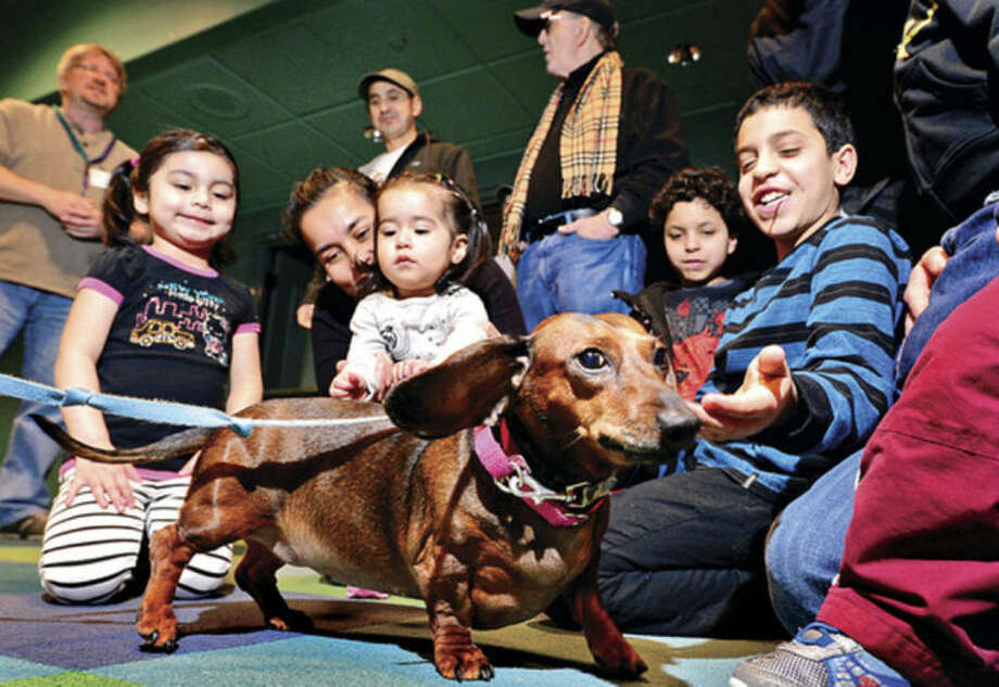 """PAWS animal shelter visits Stepping Stones Museum as part of the national """"Mutt-i-grees®"""" program Saturday where children and adults enjoy a visit from adoptable dogs like, Jenny, a 6 year old Dachshund. Museum employees and PAWS representative speak about shelter animals, adoption, and safe handling techniques that are geared toward children."""