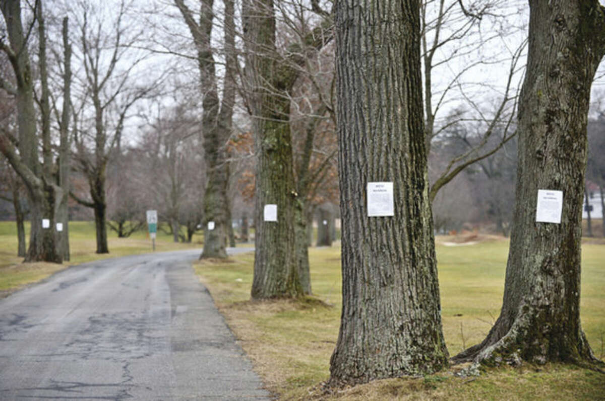 Hour photo / Erik Trautmann The Westport Parks and Recreation Department, with the consent of the tree warden, has identified approximately 15 trees that are the last of the originals along the entry road to Longshore Park. The iconic row of trees were made famous in photographer Larry Silver' photo.