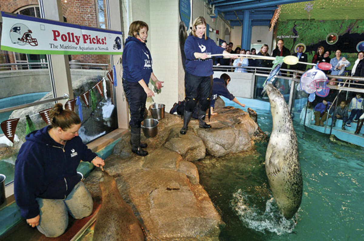 Hour photo / Erik Trautmann One of the Maritime Aquarium harbor seals, Polly, picks the Superbowl winner as aquarists Vicki Sawyer and Ellen Riker look on during the aquarium's annual event Thursday.