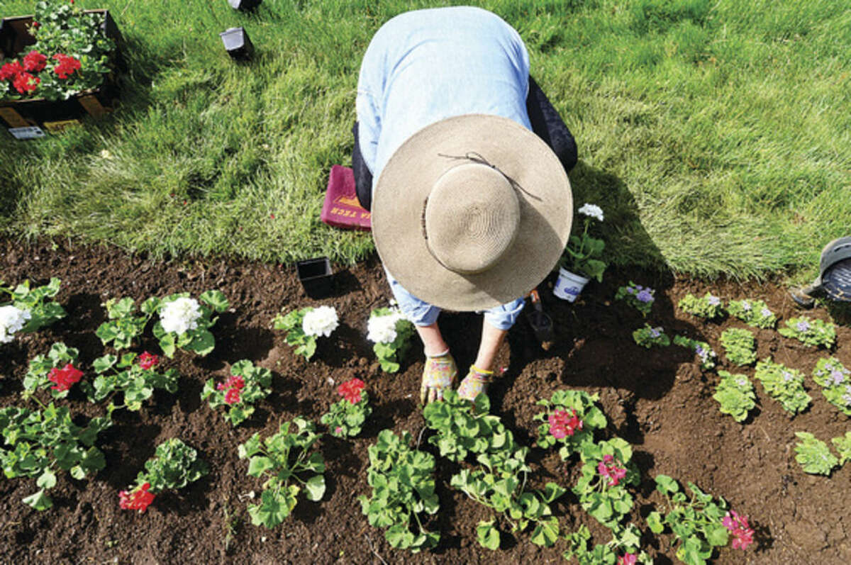 Hour photo / Erik Trautmann Norwalk Garden Club president, Jan Broome, participates in the annual planting of flowers on The Norwalk Green Wednesday in partnership with the First District Water Department.