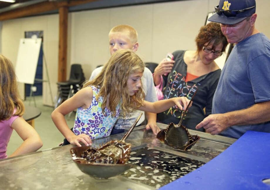 Hour photo/Danielle CallowayAbove, Melainey Tackling, 8, feeds a horseshoe crab at the Maritime Aquarium in Norwalk Sunday morning. Below, Sarah from the education department teaches horseshoe crab feeding at the Maritime Aquarium.