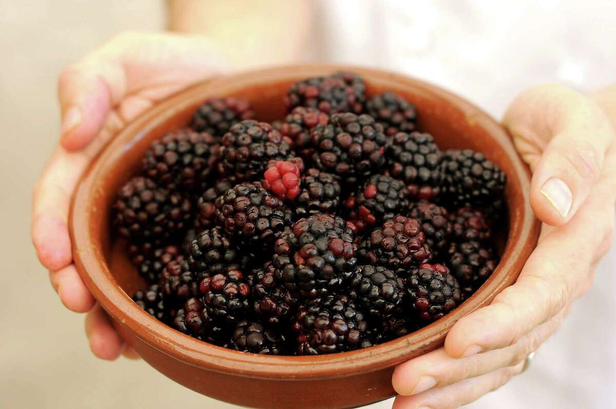 Chef Ryan Pera holds a bowl of hand picked blackberries outside Coltivare on White Oak Tuesday June 7,2016(Dave Rossman Photo)