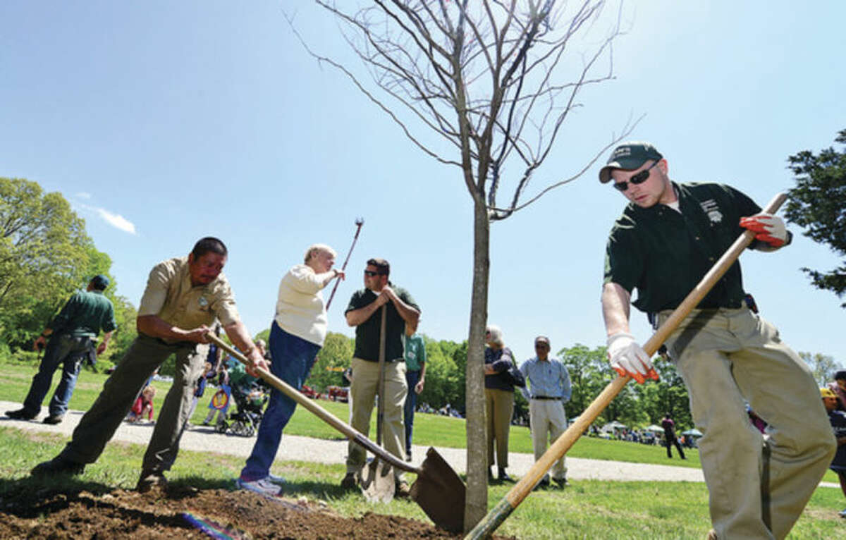 Hour photo / Erik Trautmann An eastern redbud tree is planted by Oman Gardens in honor of the late Dick Aime, who died last year at age 93 after many years as secretery of the Norwalk Tree Alliance, during the 7th annual Connecticut Tree Festival Saturday at Cranbury Park.