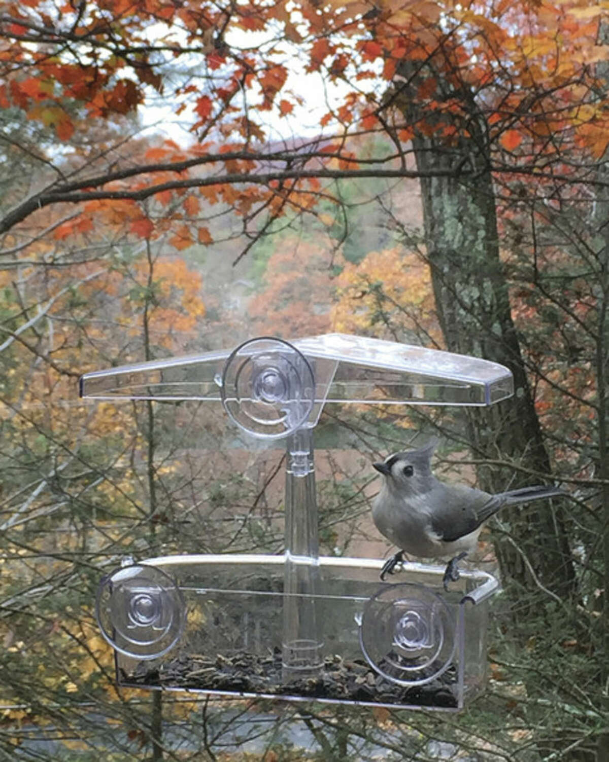 Photo by Chris Bosak A Tufted Titmouse visits a window feeder in New England.