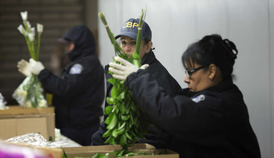 In this Jan. 9, 2014 photo, a group of U.S. Customs and Border Protection officials check imported flowers at Miami International Airport. Each year, 715 million flowers come through Miami International Airport. (AP Photo/J Pat Carter)