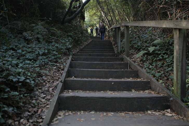 The renowned Dipsea Trail starts with 688 steps up from Old Mill Park in Mill Valley en route 7.5 miles to Stinson Beach