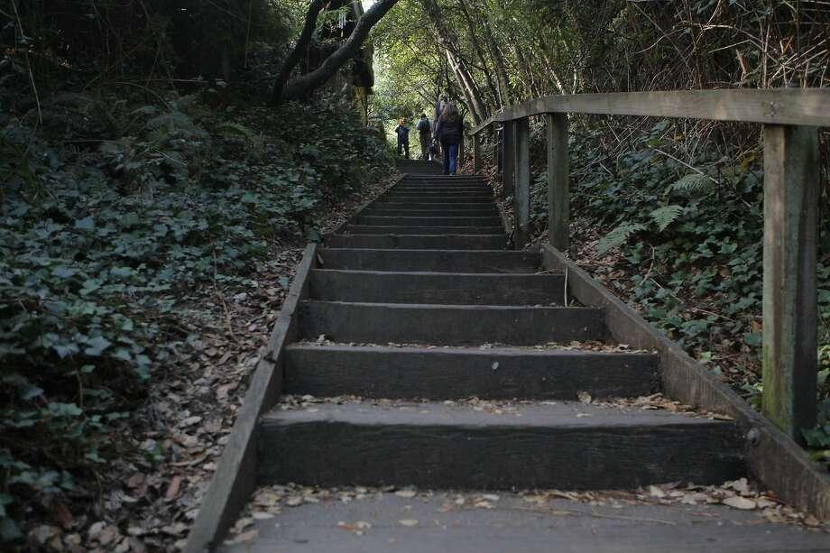 Sunday Drive: Dipsea Trail - SFGate on