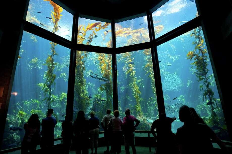 $175 'adult sleepover' coming to the Monterey Bay Aquarium