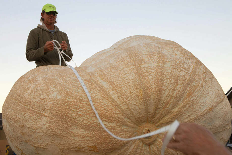 Eric Carlson takes official Great Pumpkin Commonwealth measurements of John Hawkley's pumpkin at the 41st Annual Safeway World Championship Pumpkin Weigh-Off in Half Moon Bay, Calif., Monday, Oct. 13, 2014. Hawkley of Napa Calif. was named as a favorite to win early in the day. (AP Photo/Alex Washburn)