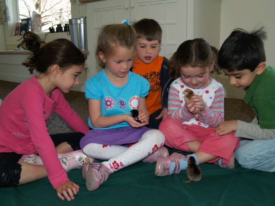 The Great Egg Hunt and Spring Celebration Returns to the New Canaan Nature Center