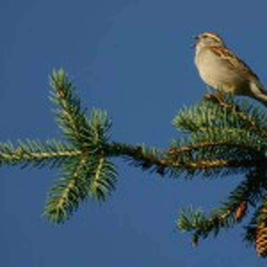 Don't miss Bird Calls!