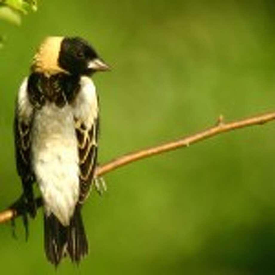 Lineup for Bird Calls 5-14