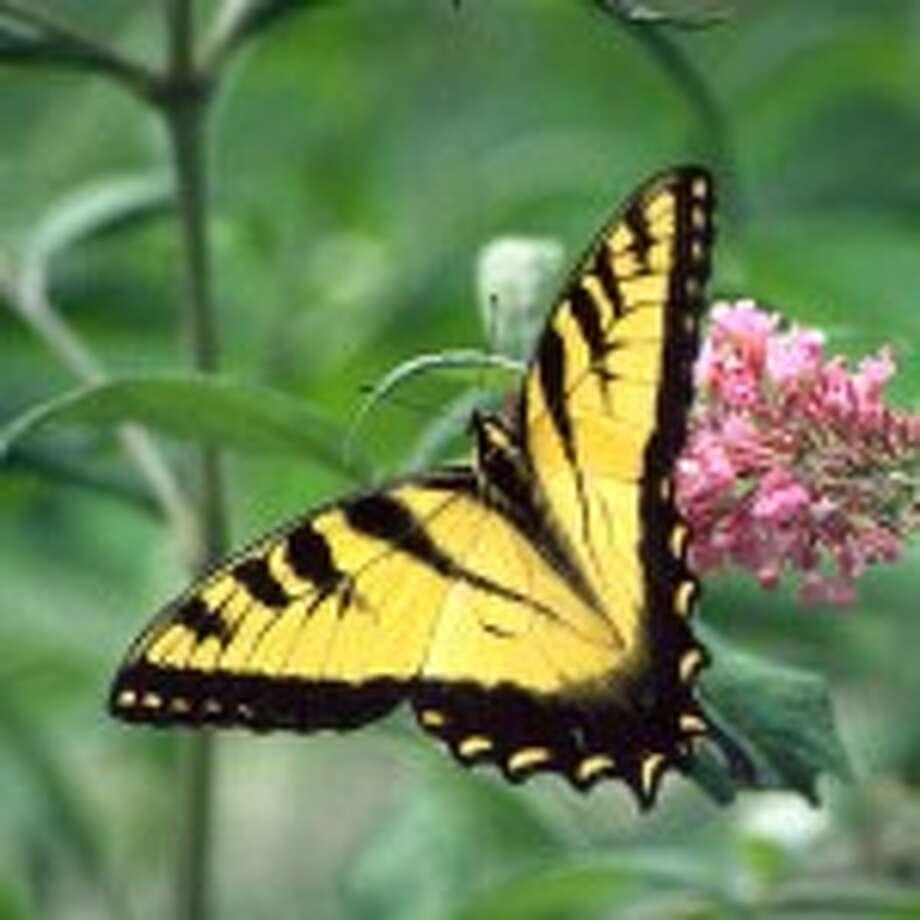 Connecticut Butterfly Association summer field trips
