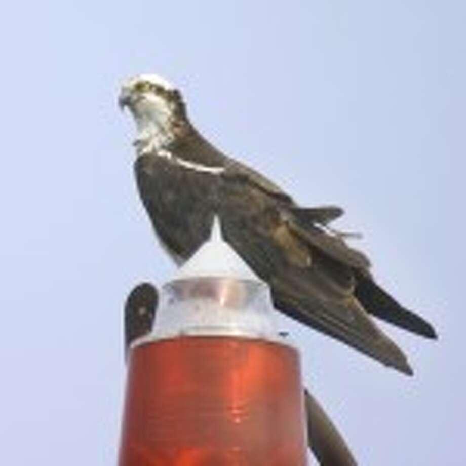 Bird Calls radio show archive for Saturday, June 25 show