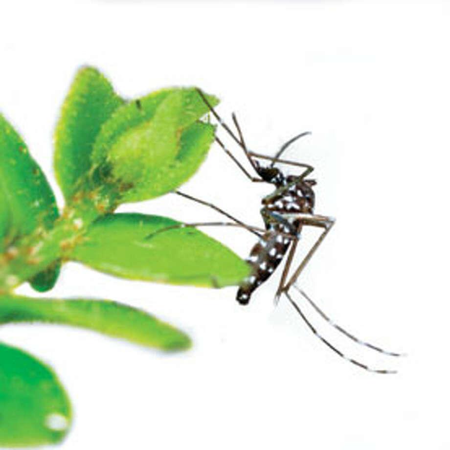 Anatomy of a Mosquito-Borne Outbreak: Scientific American / © Corbis.  All Rights Reserved.