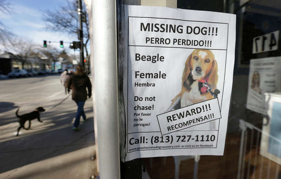 A poster for a missing dog is attached to a shop window, in Brookline, Mass., Thursday, Jan. 3, 2013. The missing dog, a beagle named Tessa, which belongs to author Dennis Lehane, went missing Christmas Eve 2012. (AP Photo/Steven Senne) / AP